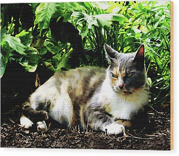 Cat Relaxing In Garden Wood Print by Susan Savad
