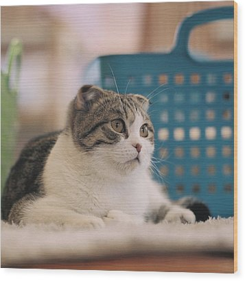 Cat Sitting On Floor Wood Print by Jiyeon-Agnes, Lee loves Analog images by Films!