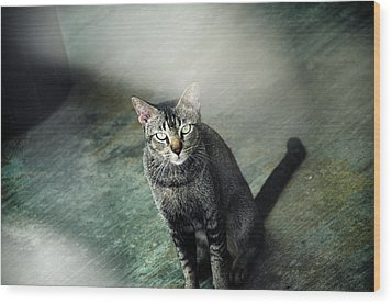 Cat Sitting On Floor Wood Print by Raj's Photography