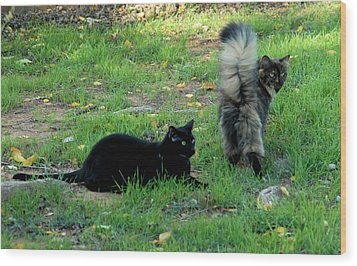 Cat Tails Wood Print by Cheryl Poland