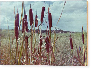 Wood Print featuring the photograph Cat Tails by Bonfire Photography