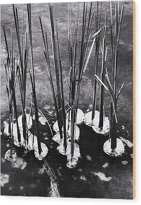 Cat-tails In Ice Wood Print by Todd Sherlock