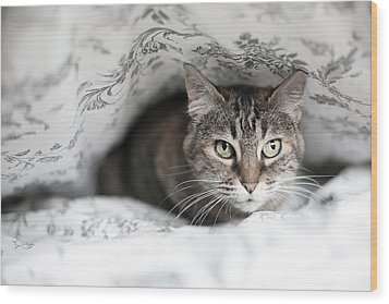 Cat Under In Blankets Wood Print by Image taken by Mayte Torres