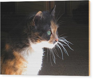 Cat Whiskers Wood Print by Sue Halstenberg