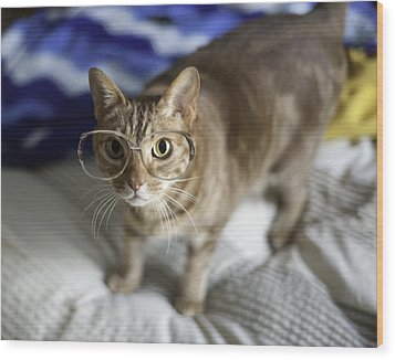 Cat With Glasses Wood Print by Www.sharp-photo.com