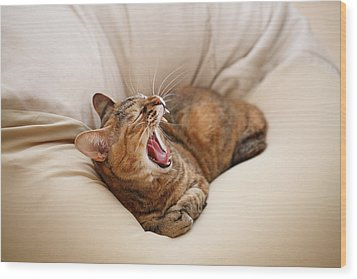 Cat Yawn On Bed Wood Print by Junku