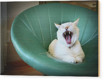 Cat Yawning In A Vintage Blue Green Chair Wood Print by Carrie Anne Castillo
