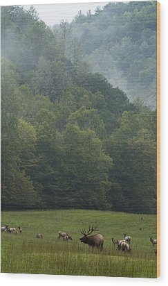 Wood Print featuring the photograph Cataloochee Elk by Carrie Cranwill