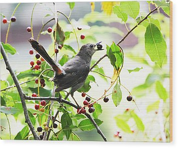 Catbird With Berry II Wood Print