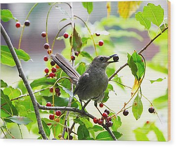 Catbird With Berry IIi Wood Print by Mary McAvoy