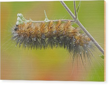 Caterpillar On A Rainy Day Wood Print by Bonnie Barry