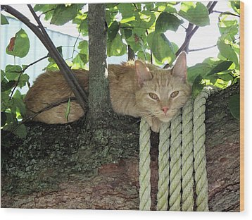 Wood Print featuring the photograph Catnap Time by Thomas Woolworth