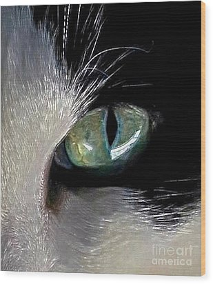 Cat's Eye Wood Print