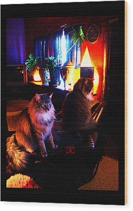Wood Print featuring the photograph Cats On A Drum by Susanne Still