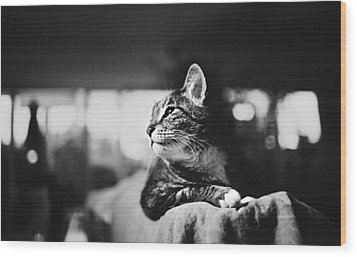 Cats Portrait Wood Print by Sumit Mehndiratta