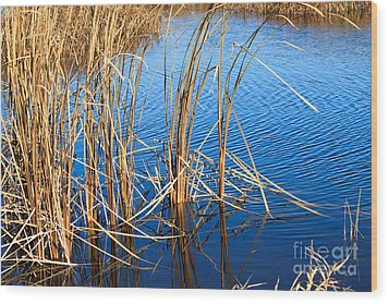Cattail Reeds Wood Print by Ms Judi