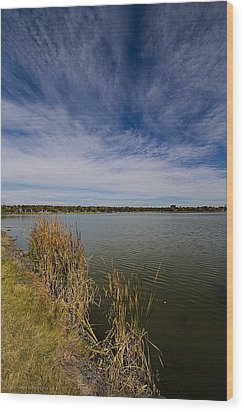 Cattails Against Colorado Blue Wood Print by KatagramStudios Photography