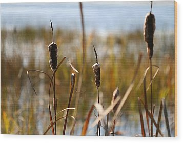 Cattails Wood Print by Brady D Hebert
