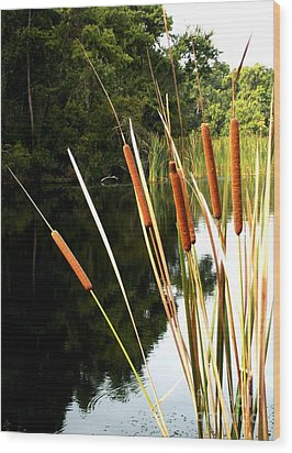 Cattails On The River Bank Wood Print