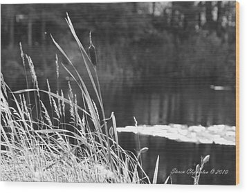 Cattails Wood Print by Steven Clipperton