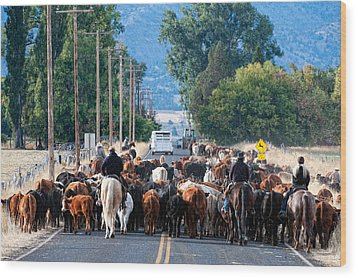 Wood Print featuring the photograph Cattle Drive by Gary Rose