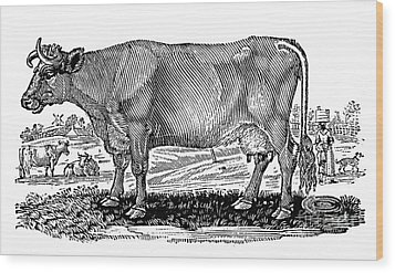 Cattle Wood Print by Granger