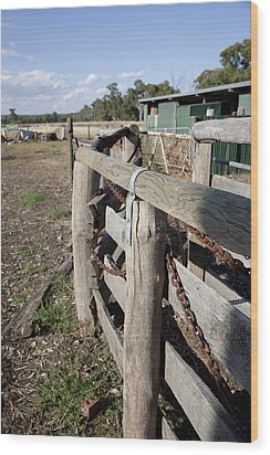 Wood Print featuring the photograph Cattle Race. by Carole Hinding