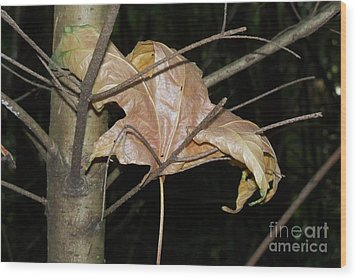 Caught In Fall Wood Print by Laurel Thomson
