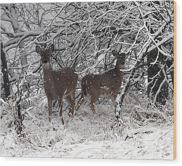 Wood Print featuring the photograph Caught In The Snow Storm by Elizabeth Winter