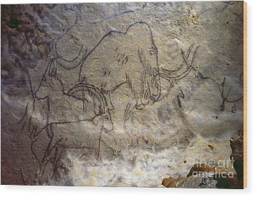Cave Art - Mammoth And Ibexes Wood Print by Granger