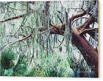 Cedar Draped In Spanish Moss Wood Print by Thomas R Fletcher