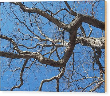 Centenarian Oak Wood Print