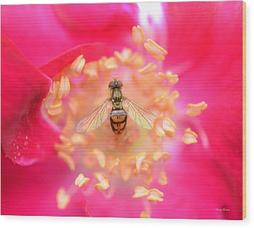 Wood Print featuring the photograph Centerpiece Bee In A Rose by George Bostian