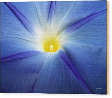 Wood Print featuring the photograph Centerpiece  Blue Morning Glory by George Bostian