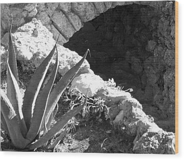 Century Plant By Jogging Trail Wood Print by Louis Nugent