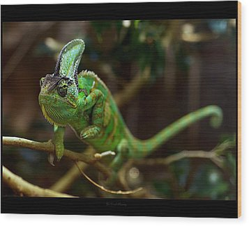 Chameleon Wood Print by 1d110