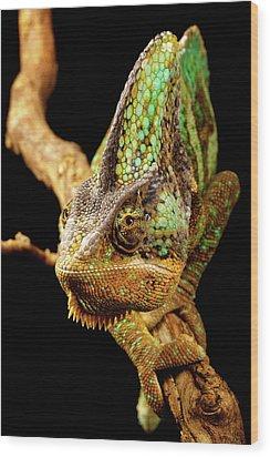 Chameleon Wood Print by MarkBridger