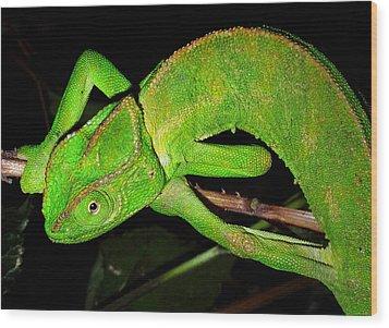 Chameleon Wood Print by Meir Ezrachi