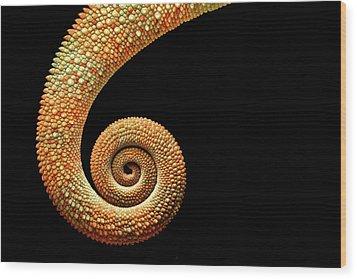 Chameleon Tail Wood Print by MarkBridger