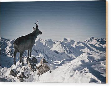 Chamois Watching Over Austria Wood Print by RICOWde