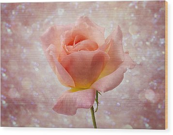Champagne Rose. Wood Print by Clare Bambers