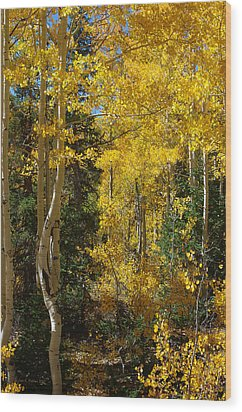 Wood Print featuring the photograph Changing Seasons by Vicki Pelham