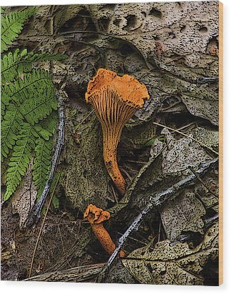 Wood Print featuring the photograph Chanterelle by Michael Friedman