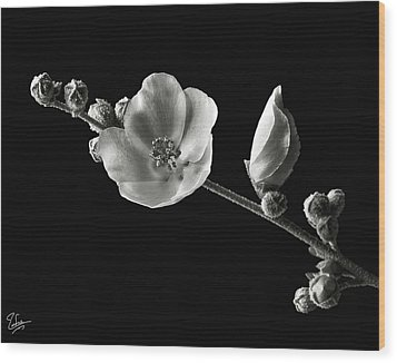 Wood Print featuring the photograph Chaparral Mallow In Black And White by Endre Balogh