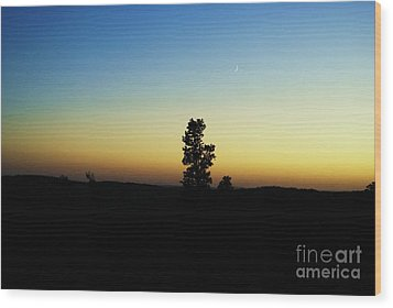Wood Print featuring the photograph Chasing The Sun by Julie Clements