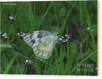 Checkered White Butterfly Wood Print by Barbara Bowen