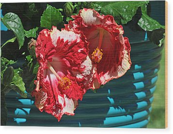 Cheery Cherry Appaloosa Wood Print by Lynn Bauer