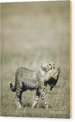 Cheetah Cub With Hat Wood Print by Greg Dimijian