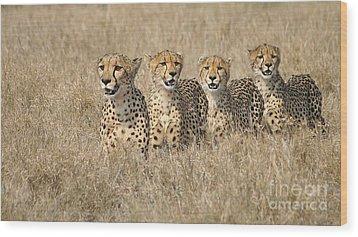 Cheetah Family Wood Print by Mareko Marciniak