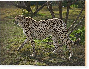 Cheetah  Wood Print by Garry Gay